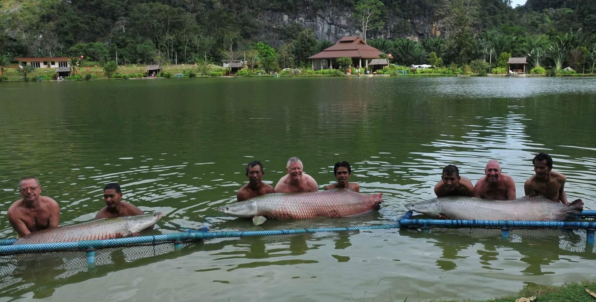 Рыбалка на платном озере и на естественных водоёмах вокруг Пхукета. В том числе и нахлыстом.